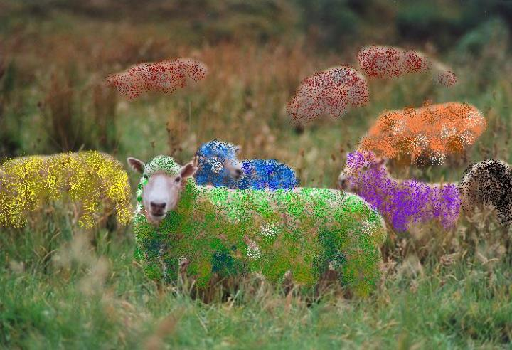 colored_sheep