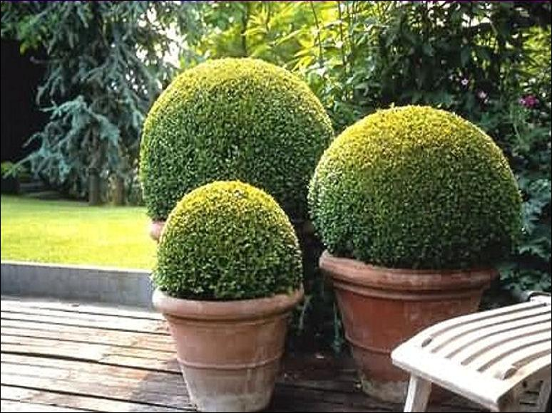 how to make ivy topiary