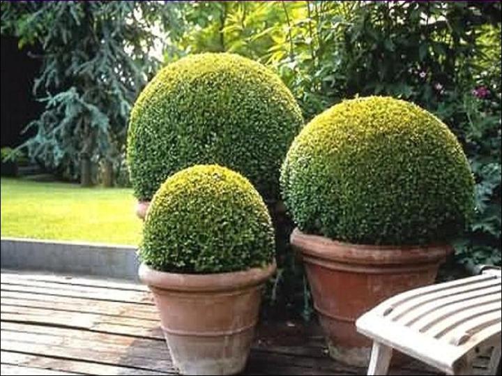 topiary brick