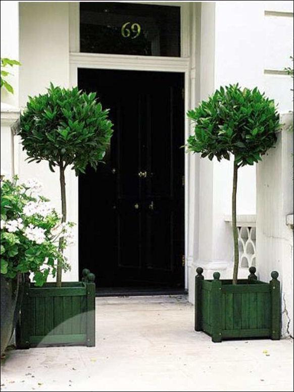 topiary front door