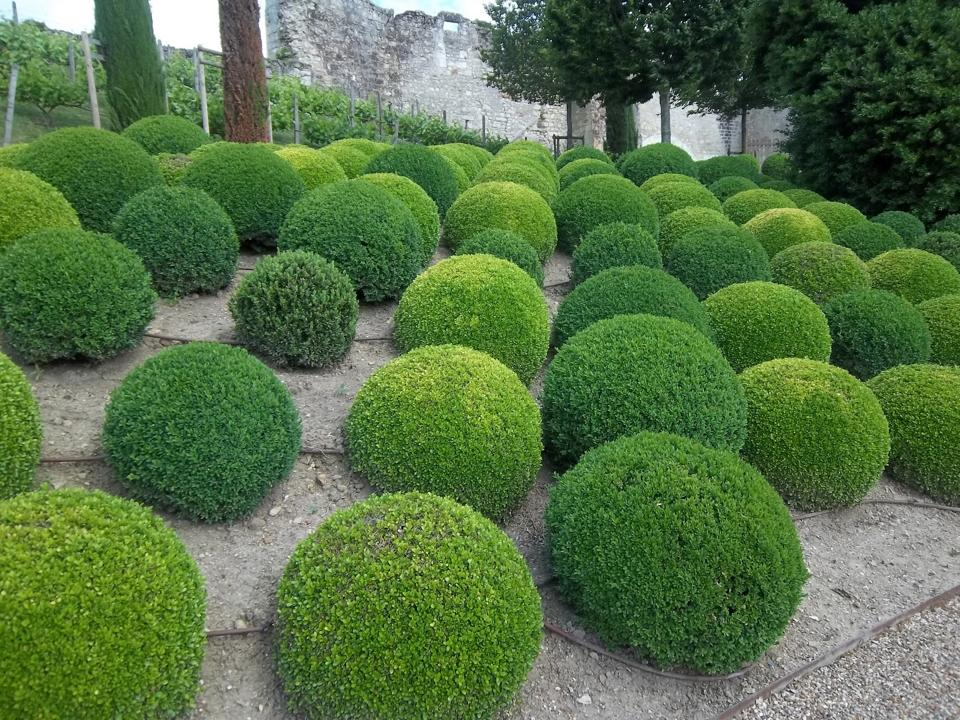 European Topiary Adriana Sassoon