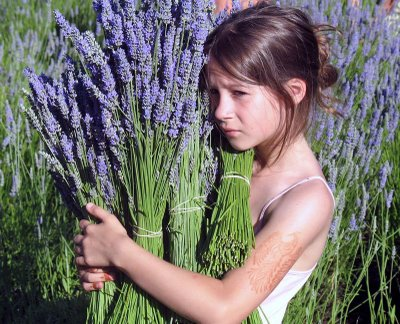 Girl at Lavender Harvest